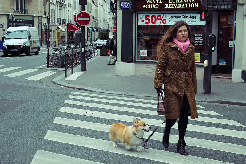 People in Paris walk with their dogs to get around, and it's no surprise. So do people in the Arctic! © Mia Bennett, 2012.