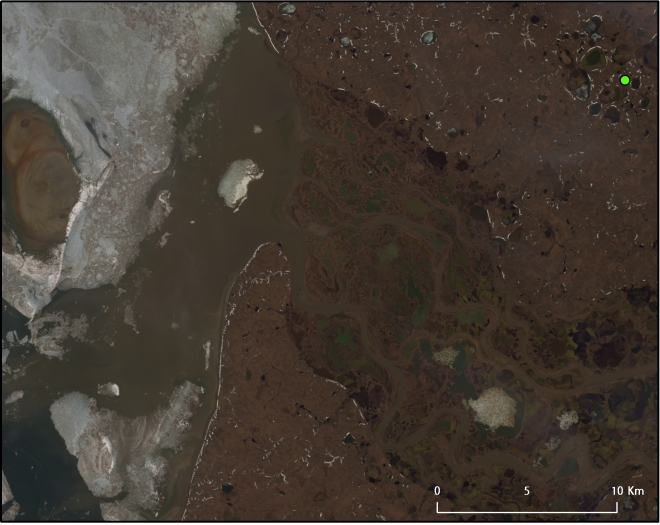 "Landsat 8 image taken over the Yamal Peninsula, Russian Federation. June 10, 2013. The green dot is the supposed site of the ""Siberian crater,"" which appeared in September 2014. NASA/USGS."