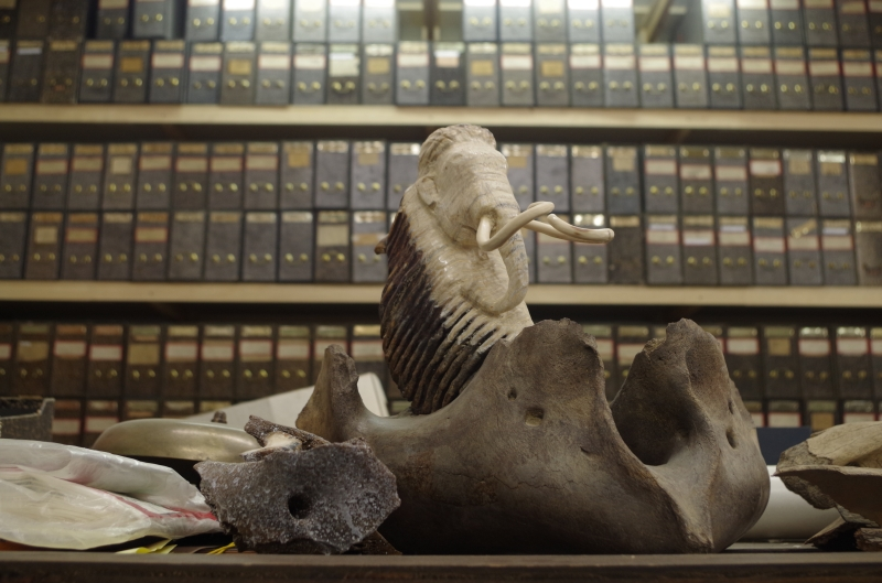 More books and a mammoth carved out of mammoth ivory.