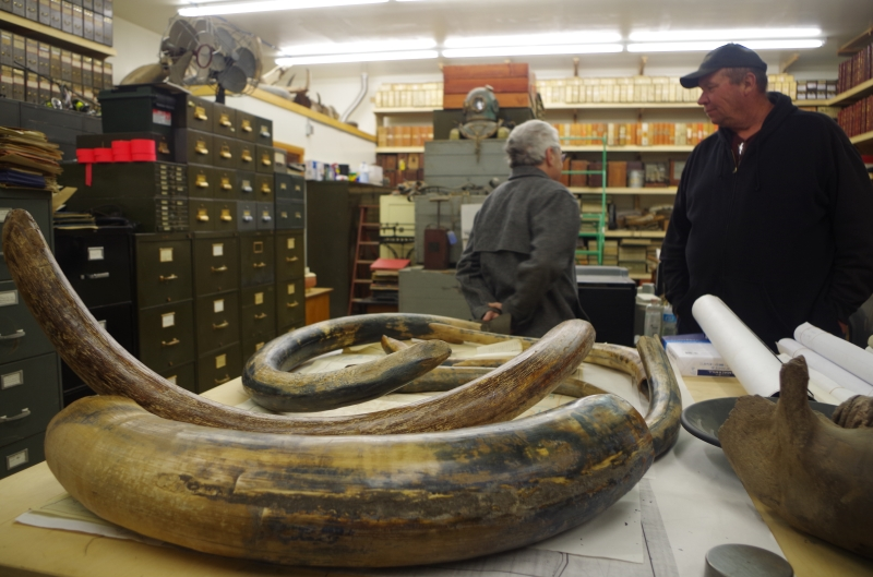 John Reeves (R) in his library with some mammoth tusks.