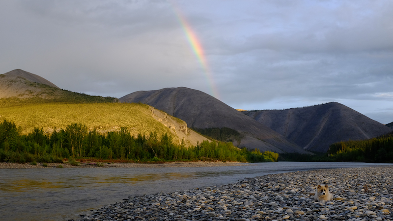 dog-rainbow-yukon