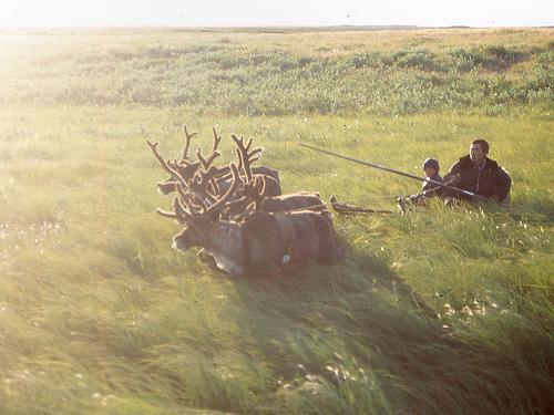 nenets-reindeer-herding