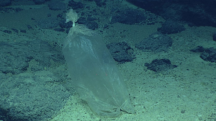 A plastic bag on Enigma Seamount near the Mariana Trench.