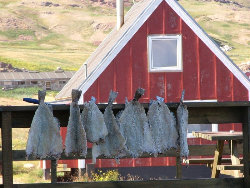 Fish drying in Kagsiarsuk, Greenland.